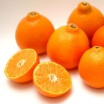 紅柑-20斤裝